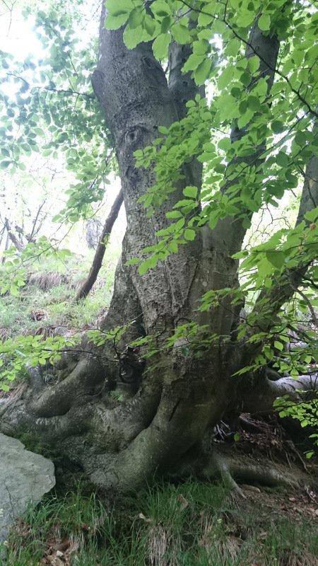 Una giornata per la consapevole connessione con il nostro SE in mezzo alla natura